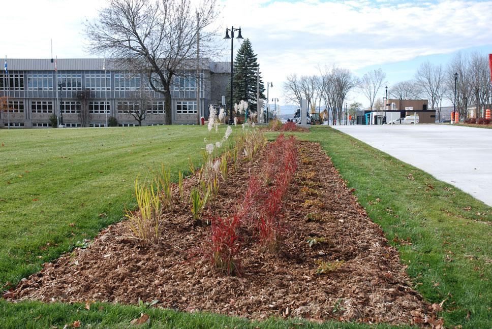 Plantation d'arbres et d'arbustes au centre-ville