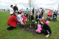 Nouveaux nés - Plantation d'arbre